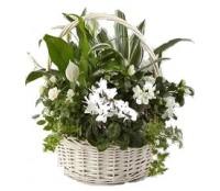Cos cadou cu plante