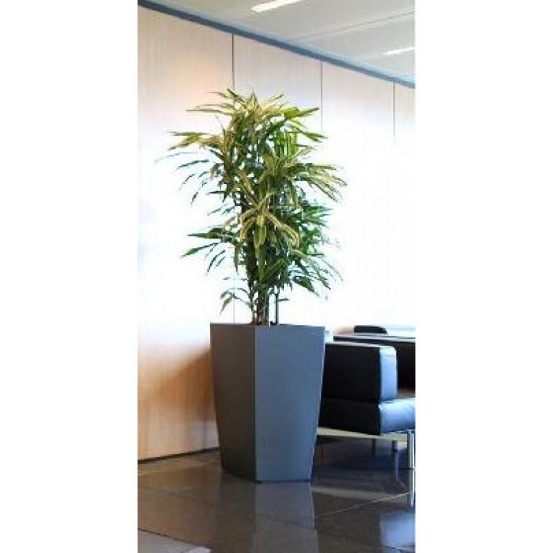 dracaena warneckii ramificata 27 120 cm in lechuza cubico 30 x 56 cm. Black Bedroom Furniture Sets. Home Design Ideas