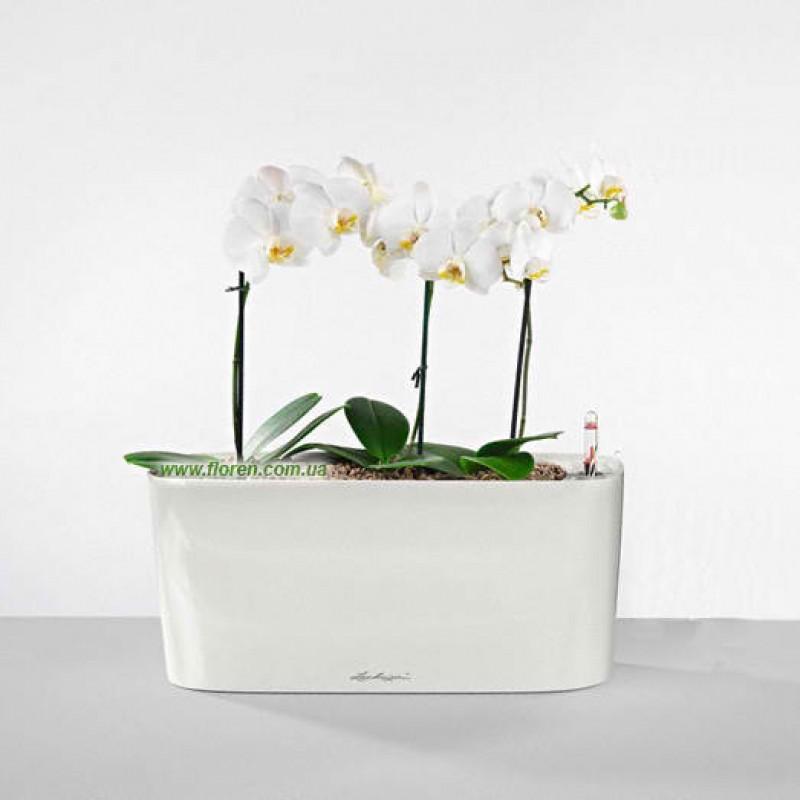 phalenopsis 2 plante in ghiveci jardiniera lechuza delta 40 cm. Black Bedroom Furniture Sets. Home Design Ideas
