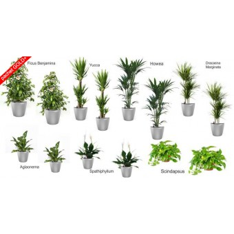 Pachet plante gold plus (14 plante decorative in ghivece Lechuza classico)