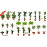 Pachet plante platinum (24 plante decorative in ghivece Hobby)