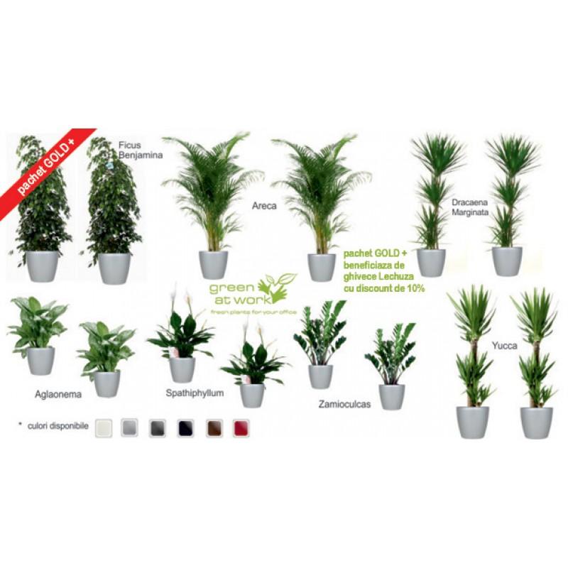 Pachet plante gold plus 14 plante decorative in ghivece Plante decorative