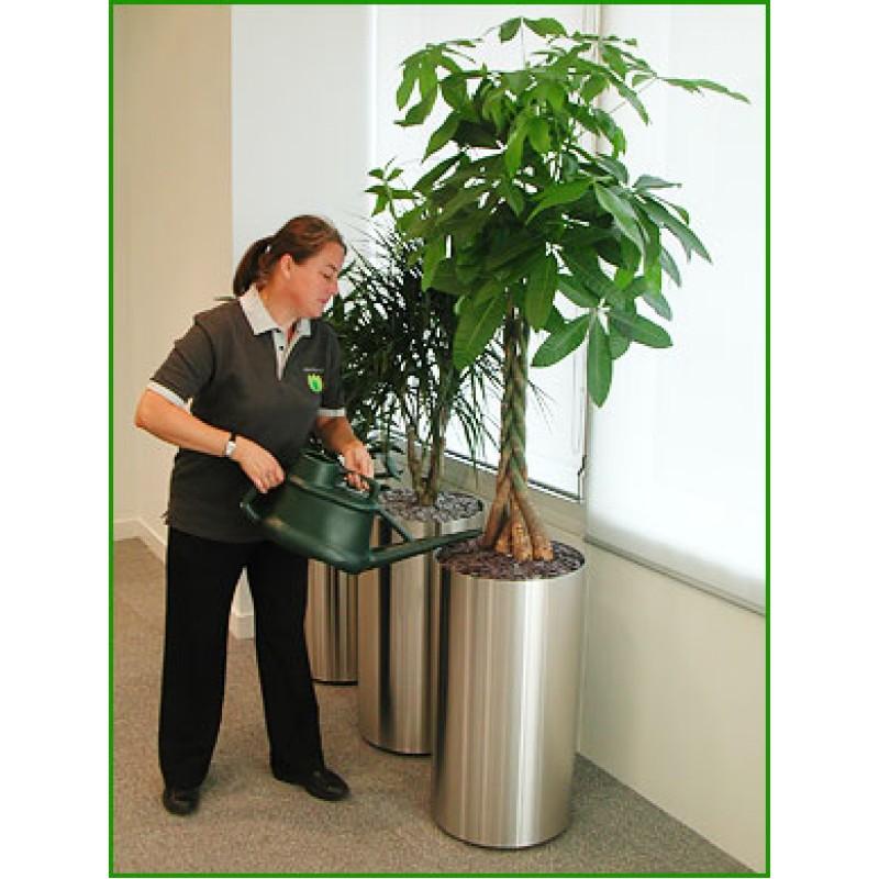 Plante De Interior Of Intretinere Plante De Interior Abonament