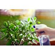 Fertilizare si tratare initiala plante de interior